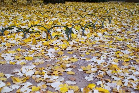 leaves-photo(c)lazylisa